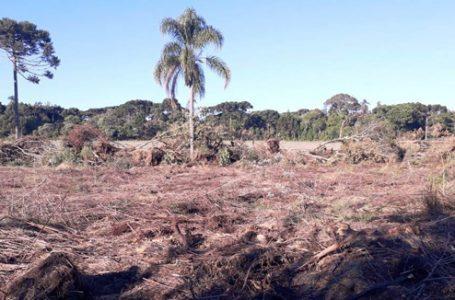 Polícia Ambiental aplica multas em São Mateus do Sul, Rebouças e Lapa
