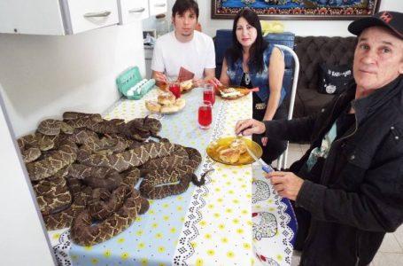 Paranaense mantém mais de 150 cobras venenosas dentro de casa