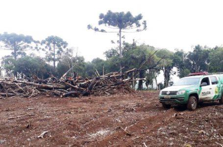 Polícia Ambiental localiza destruição de mata nativa em São Mateus do Sul