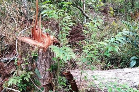 Agricultor de São João do Triunfo é multado em R$ 498 mil por danos ao meio ambiente