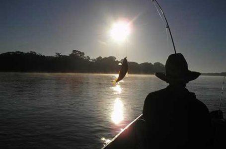 Seis espécies de peixes estão com a pesca proibida no Paraná