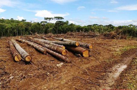 Dono de propriedade rural é preso e multado por desmatamento ilegal em Irati