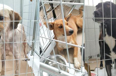 São João do Triunfo inicia castração de cães de rua