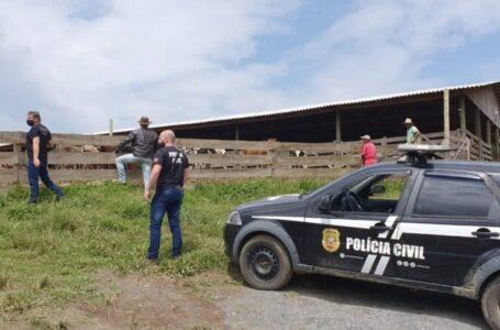 Gado furtado em Santa Cecília é encontrado em Papanduva