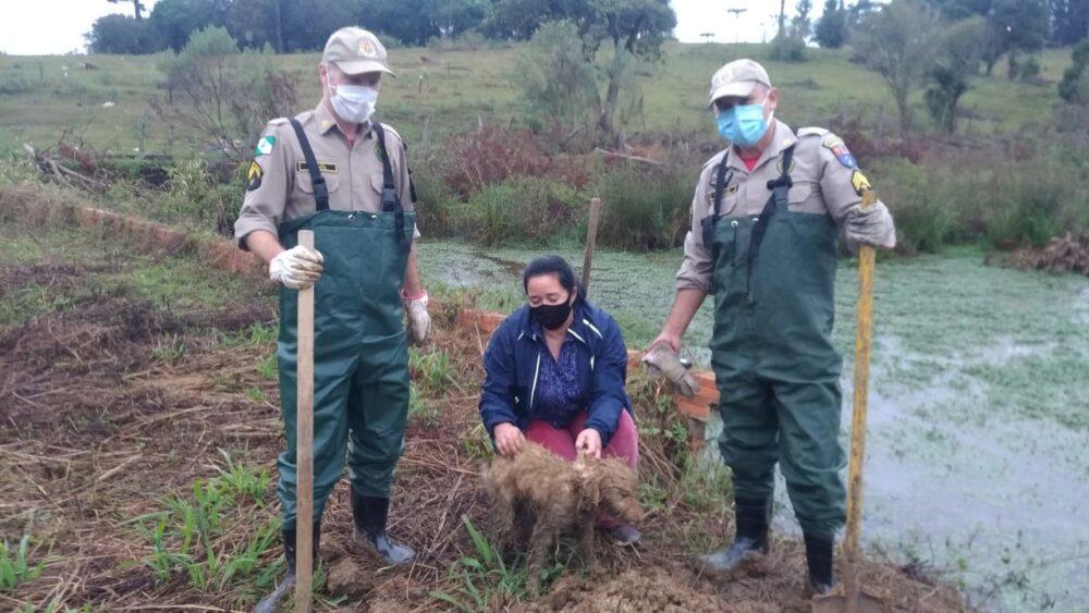 Bombeiros de Irati resgatam cachorro que ficou preso em buraco