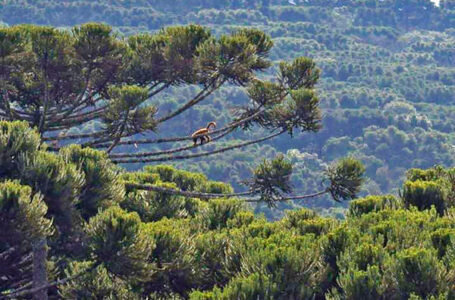 Floresta Nacional de Irati é incluída em programa federal