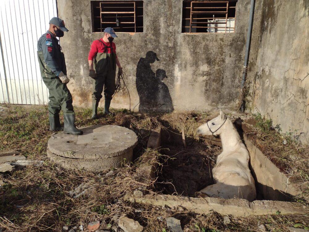 Cavalo é resgatado após cair em fossa em Canoinhas
