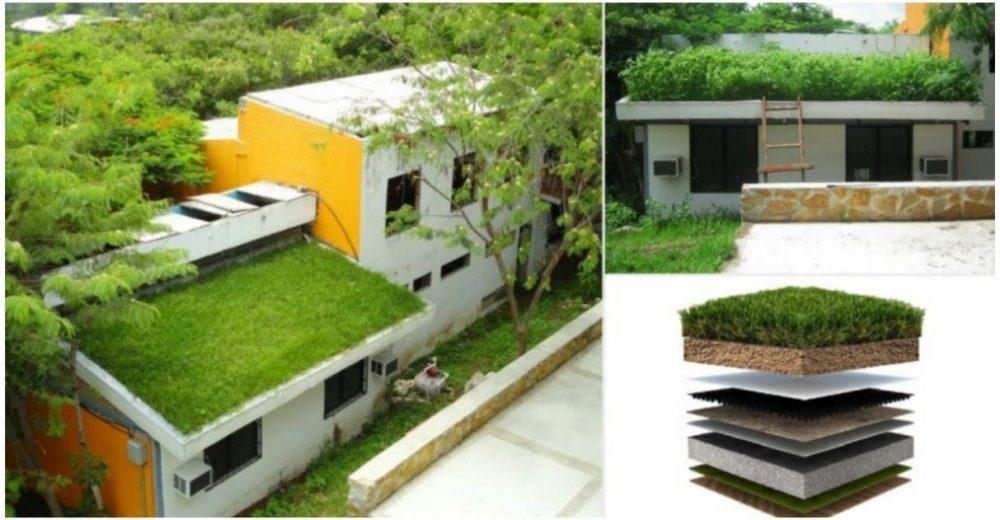 Pesquisadores mexicanos criam telhado verde capaz de resfriar ambientes em até 15 °C