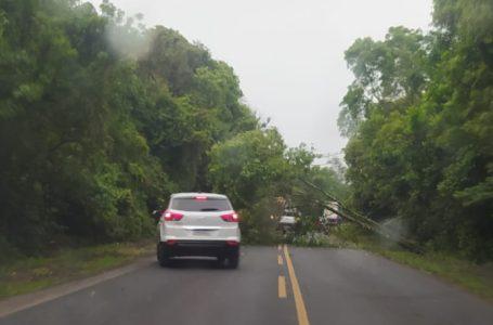 Árvore cai e bloqueia PR-151 em Ponta Grossa